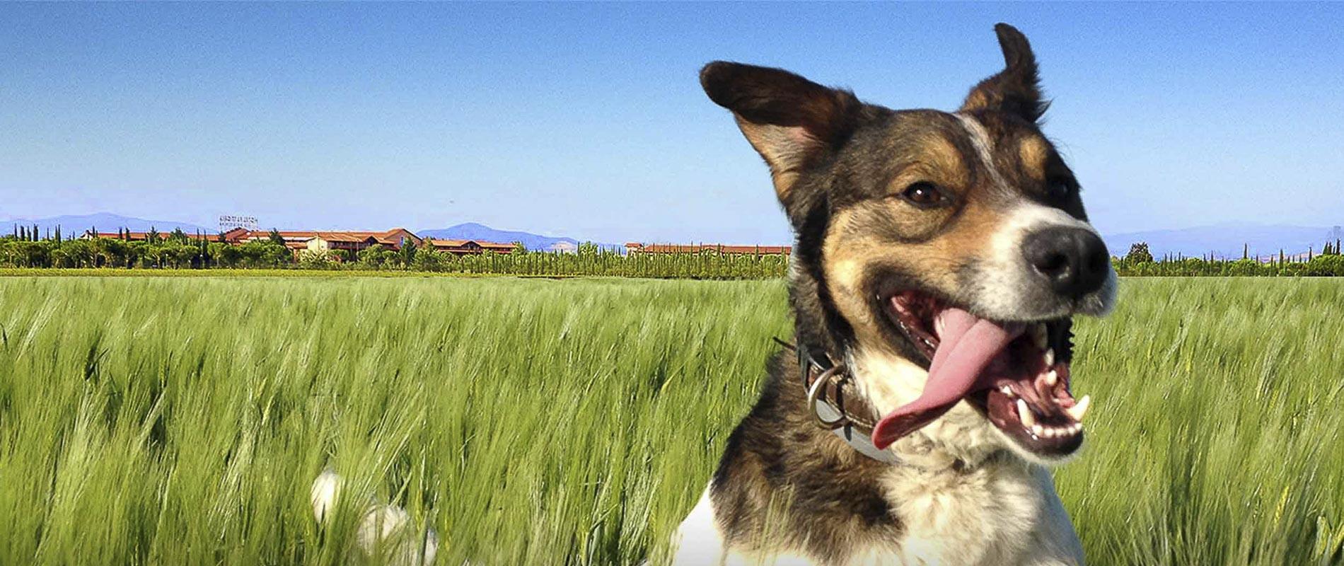 fattoria-cane-testata